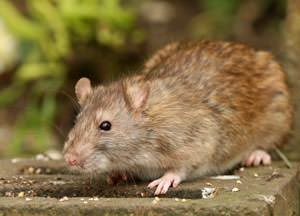 A mouse outside a Georgia home